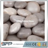 White Round Pebble Stone Wholesale for Garden and Landscaping